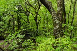 雨に濡れた原生林の写真素材 [FYI03472689]