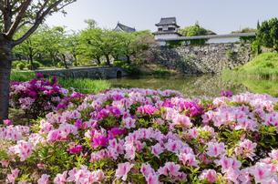 舞鶴公園のつつじの写真素材 [FYI03472755]