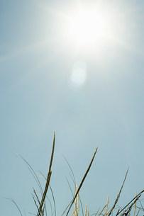 Bright sunlight over sand dunesの写真素材 [FYI03472772]
