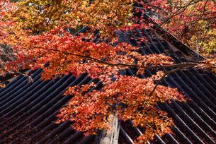 美しい紅葉と瓦屋根の写真素材 [FYI03473203]
