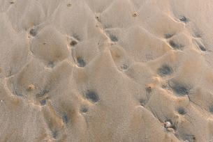 波紋のある砂浜の写真素材 [FYI03473232]