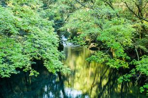 緑の菊池渓谷の写真素材 [FYI03473357]