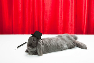 Rabbit wearing top hat with magic wandの写真素材 [FYI03474018]