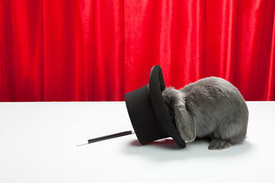 Rabbit with top hat and magic wandの写真素材 [FYI03474025]