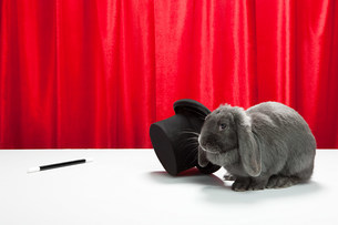 Rabbit with top hat and magic wandの写真素材 [FYI03474026]