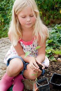 Girl gardening in vegetable gardenの写真素材 [FYI03475344]