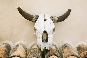 Wall mounted cattle skull,Granada,Spainの写真素材 [FYI03475927]