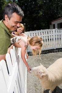 Girl feeding sheep at the zooの写真素材 [FYI03478634]