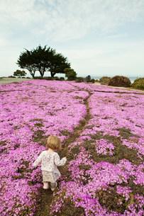 Toddler walking through pink flowersの写真素材 [FYI03479833]