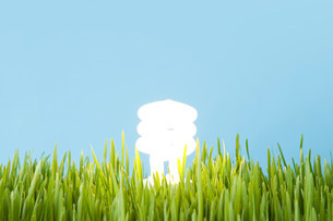 An energy saving lightbulbの写真素材 [FYI03479838]