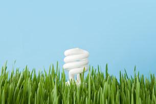 An energy saving lightbulbの写真素材 [FYI03479841]