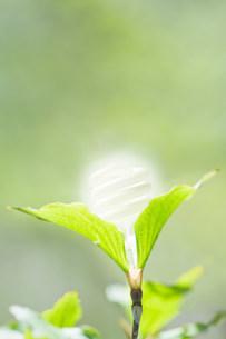 Energy saving lightbulb in a plantの写真素材 [FYI03479844]