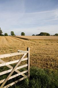 Gate opening onto wheat fieldの写真素材 [FYI03479915]
