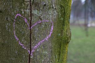 Broken heart drawn on a tree trunkの写真素材 [FYI03479940]