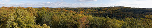 Panorama of forest near Frankfurt, Germanyの写真素材 [FYI03480768]