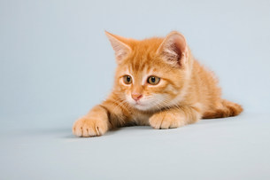 Ginger kitten lying downの写真素材 [FYI03480837]