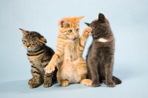 Three catsの写真素材 [FYI03480859]