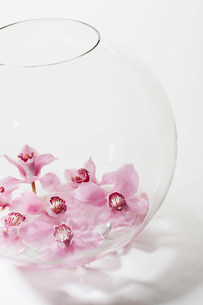 Pink flowers in glass bowlの写真素材 [FYI03481114]