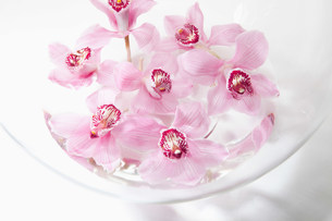Pink flowers in glass bowlの写真素材 [FYI03481118]