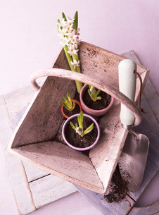 Plant bulbs in basket with trowelの写真素材 [FYI03481332]