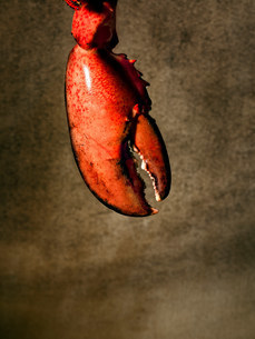 Lobster clawの写真素材 [FYI03481667]