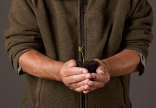 Man holding seedlingの写真素材 [FYI03482446]