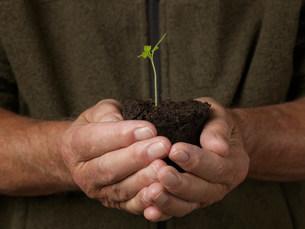 Man holding seedlingの写真素材 [FYI03482531]