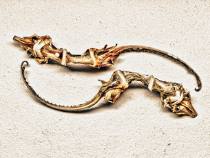 Skeletons of animals found on seashoreの写真素材 [FYI03483692]