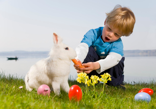 boy feeding bunny carrot,easter eggsの写真素材 [FYI03488539]