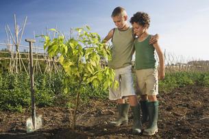 Two boys planting treeの写真素材 [FYI03489205]