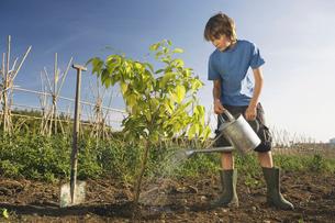 Pre-adolescent boy planting treeの写真素材 [FYI03489226]