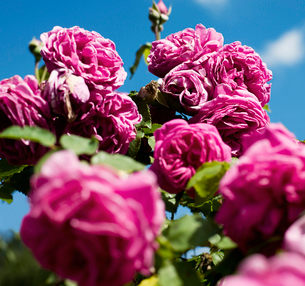Pink flowers close upの写真素材 [FYI03490337]