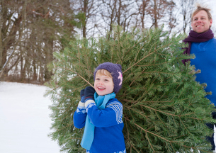 Father and son carrying christmas treeの写真素材 [FYI03490731]