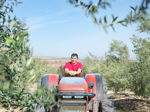 Man on tractor in olive groveの写真素材 [FYI03491436]
