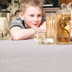Boy looking at animals in jarsの写真素材 [FYI03491644]