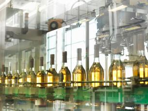 Wine bottles in plantの写真素材 [FYI03494199]