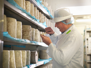 Worker checking blue cheese in factoryの写真素材 [FYI03494457]