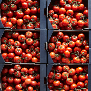 Packages of cherry tomatoesの写真素材 [FYI03495537]