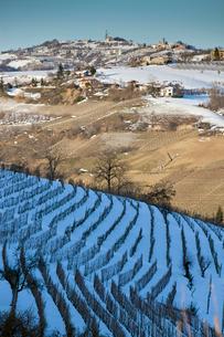 Trees growing on snowy rural hillsideの写真素材 [FYI03496110]