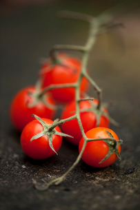Close up of cherry tomatoes on vineの写真素材 [FYI03496622]