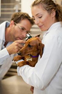 Veterinarians examining dog in kennelの写真素材 [FYI03496739]