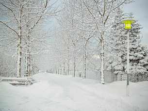 Trees and road in snowy landscapeの写真素材 [FYI03497127]