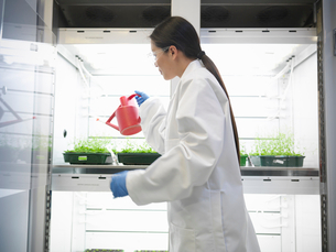 Scientist watering plants in containerの写真素材 [FYI03497800]