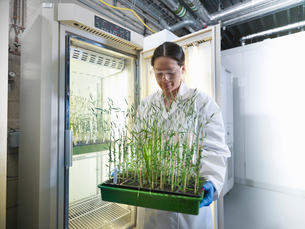 Scientist carrying potted plants in labの写真素材 [FYI03497803]