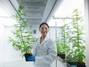 Scientist holding potted plant in labの写真素材 [FYI03497809]