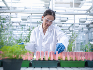 Scientist examining potted plantsの写真素材 [FYI03497811]