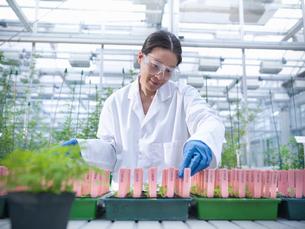 Scientist examining potted plantsの写真素材 [FYI03497811]