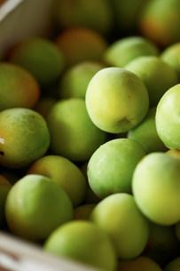 Heap of fresh green plumsの写真素材 [FYI03499525]