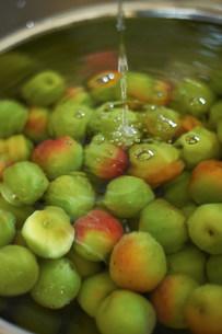 Heap of fresh green plums in waterの写真素材 [FYI03499528]