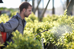 Young man spraying pesticide in plant nurseryの写真素材 [FYI03500046]